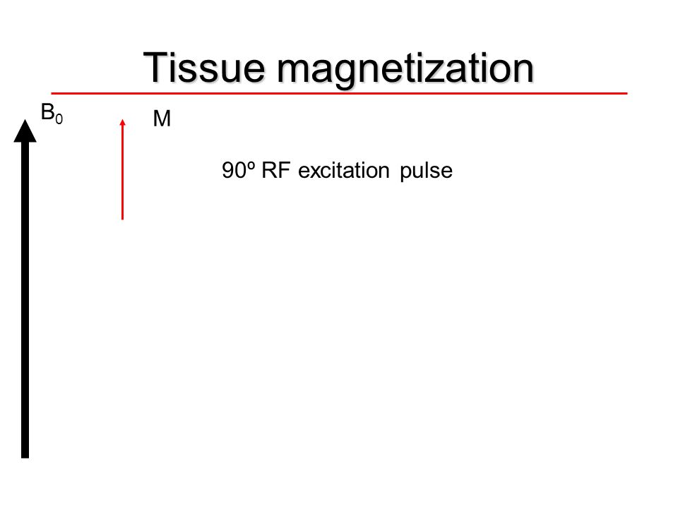 Tissue magnetization B0 M 90º RF excitation pulse