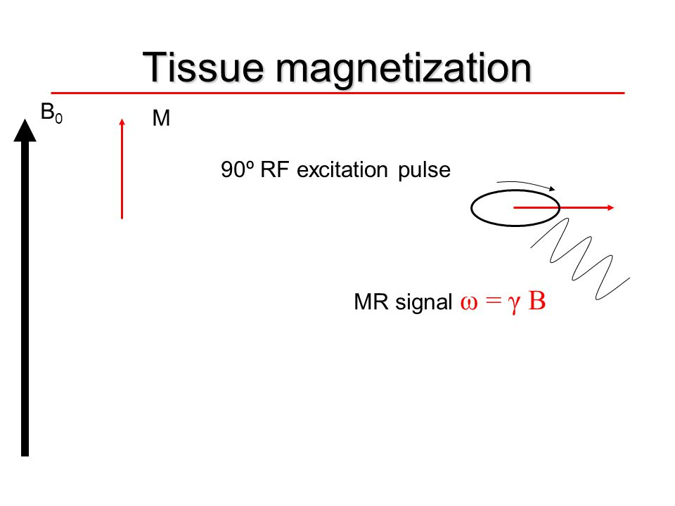 Tissue magnetization B0 M 90º RF excitation pulse MR signal ω = γ B