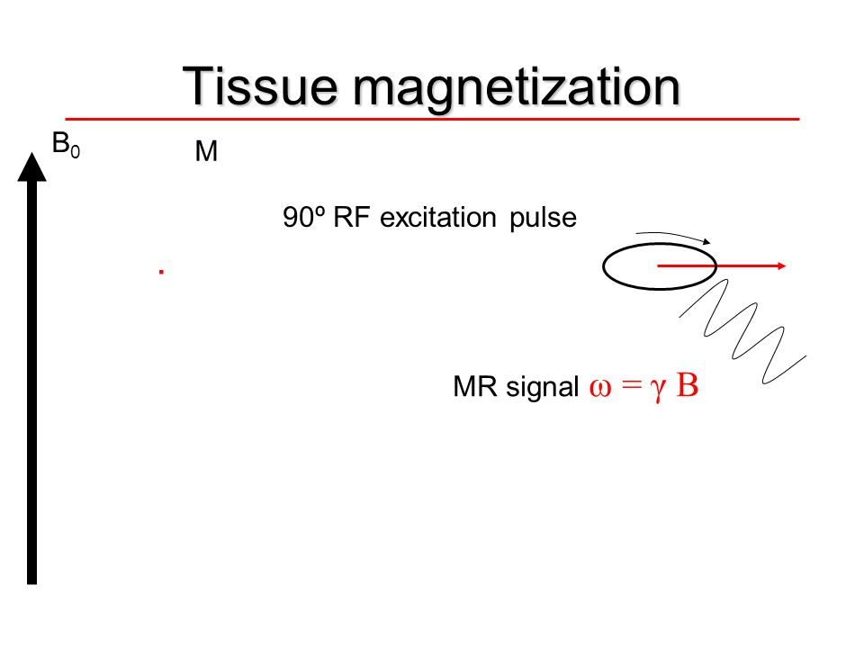 Tissue magnetization B0 M 90º RF excitation pulse . MR signal ω = γ B