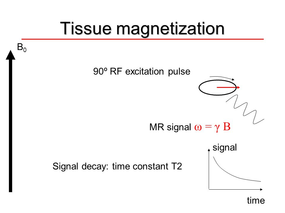 Tissue magnetization B0 90º RF excitation pulse MR signal ω = γ B