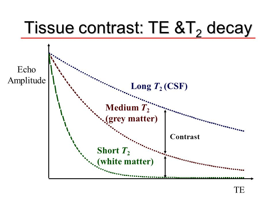 Tissue contrast: TE &T2 decay