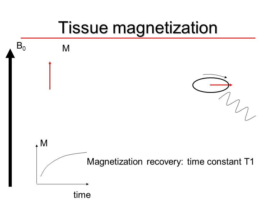 Tissue magnetization B0 M M Magnetization recovery: time constant T1