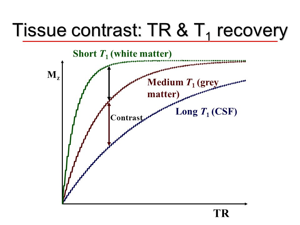 Tissue contrast: TR & T1 recovery
