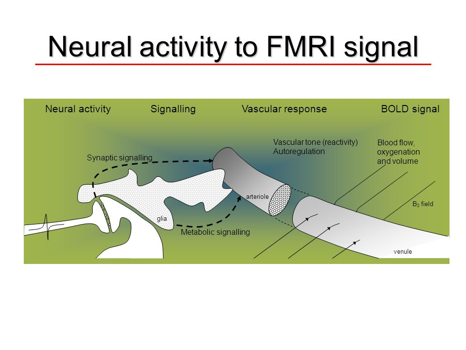 Neural activity to FMRI signal