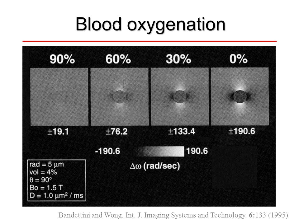 Blood oxygenation Bandettini and Wong. Int. J. Imaging Systems and Technology. 6:133 (1995)