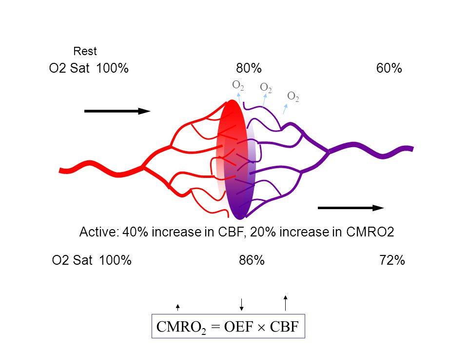 Active: 40% increase in CBF, 20% increase in CMRO2