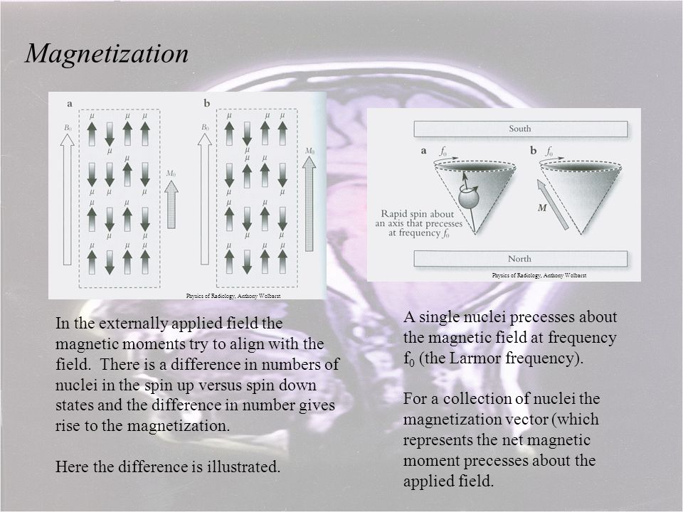 Magnetization Physics of Radiology, Anthony Wolbarst. Physics of Radiology, Anthony Wolbarst.