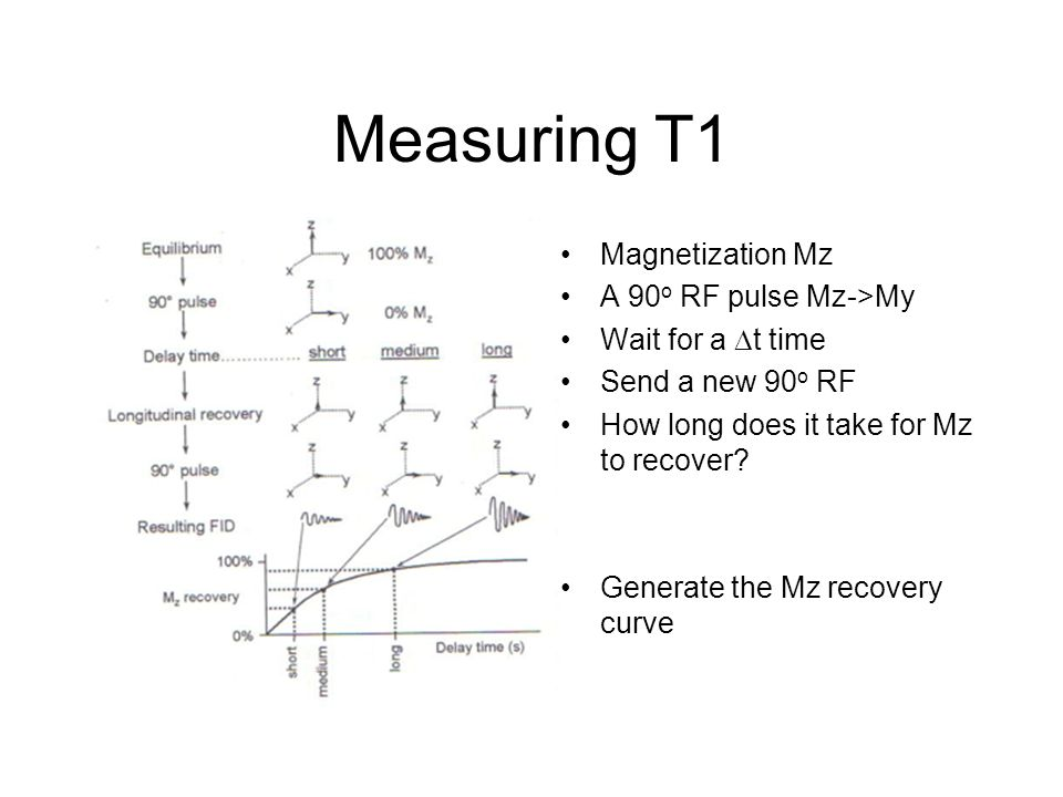 Measuring T1 Magnetization Mz A 90o RF pulse Mz->My