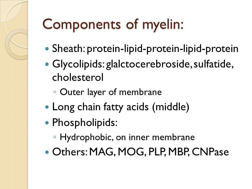 Components of myelin: Sheath: protein-lipid-protein-lipid-protein