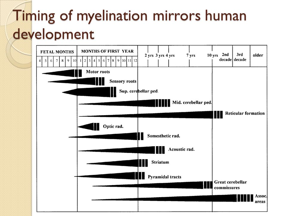 Timing of myelination mirrors human development
