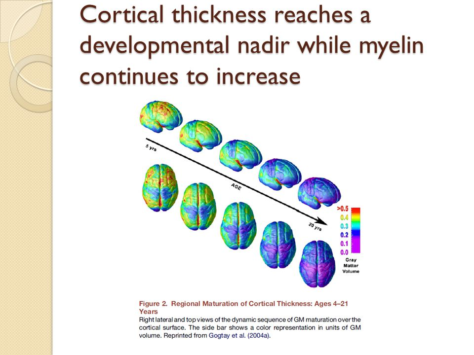 Cortical thickness reaches a developmental nadir while myelin continues to increase