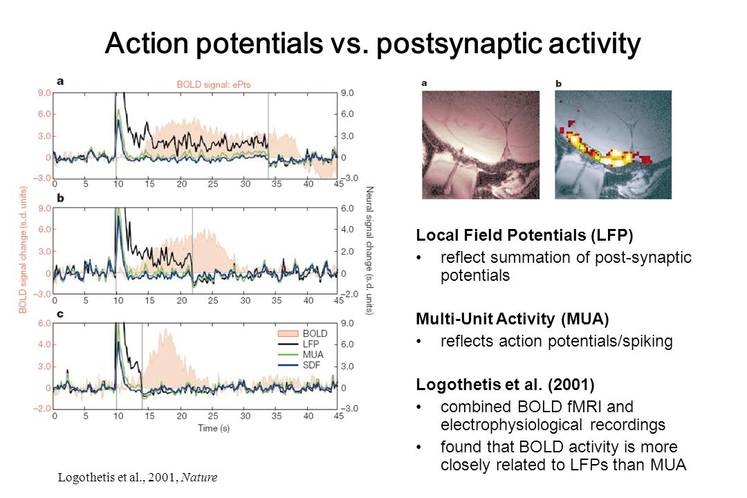 Action potentials vs. postsynaptic activity