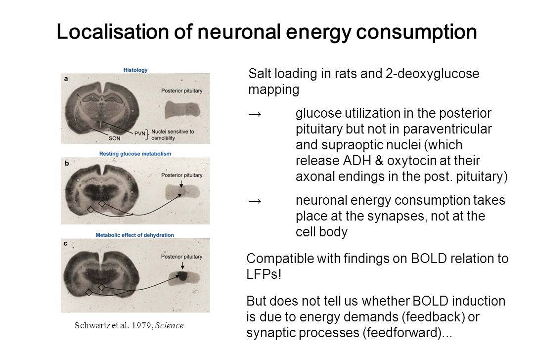 Localisation of neuronal energy consumption