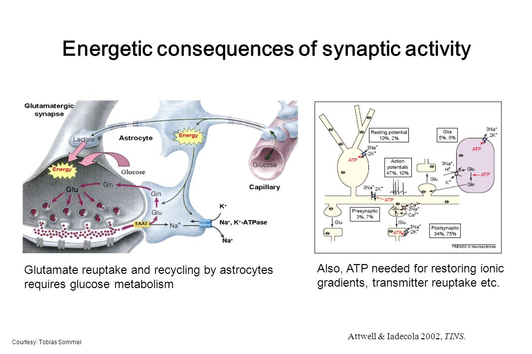 Energetic consequences of synaptic activity