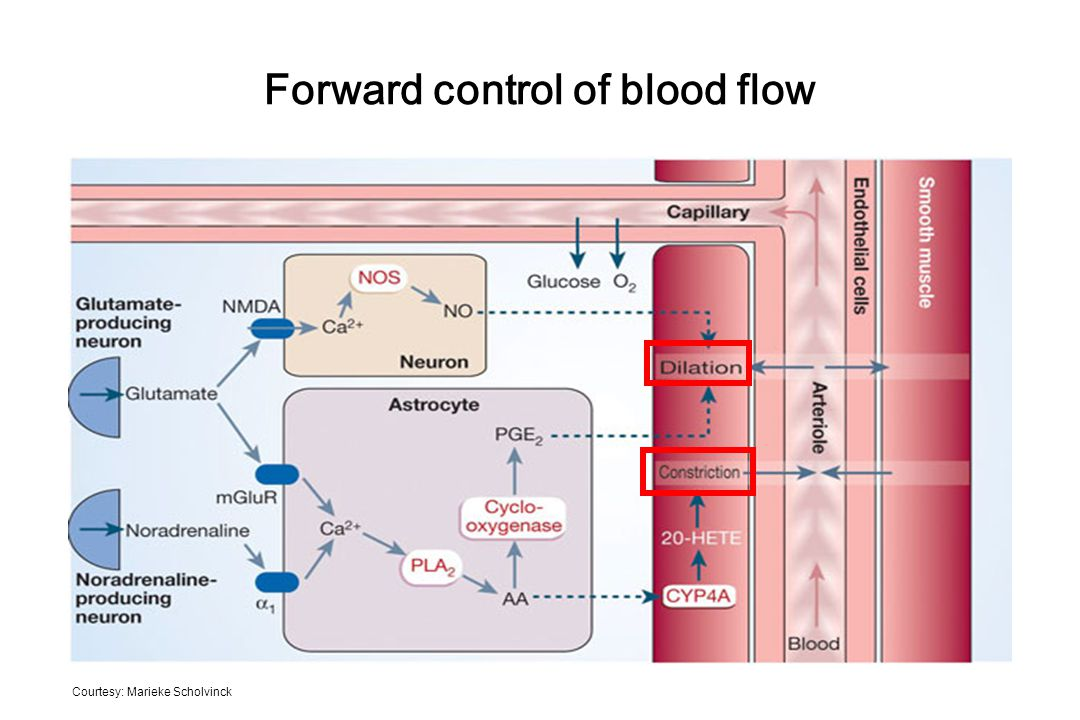 Forward control of blood flow