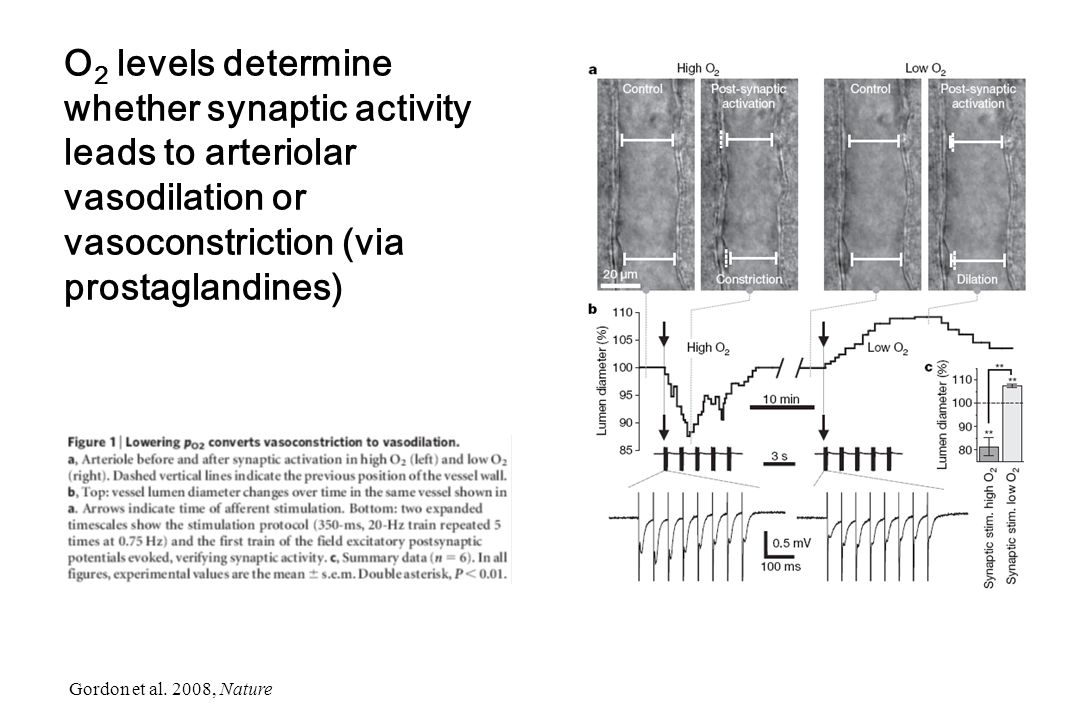 O2 levels determine whether synaptic activity leads to arteriolar vasodilation or vasoconstriction (via prostaglandines)