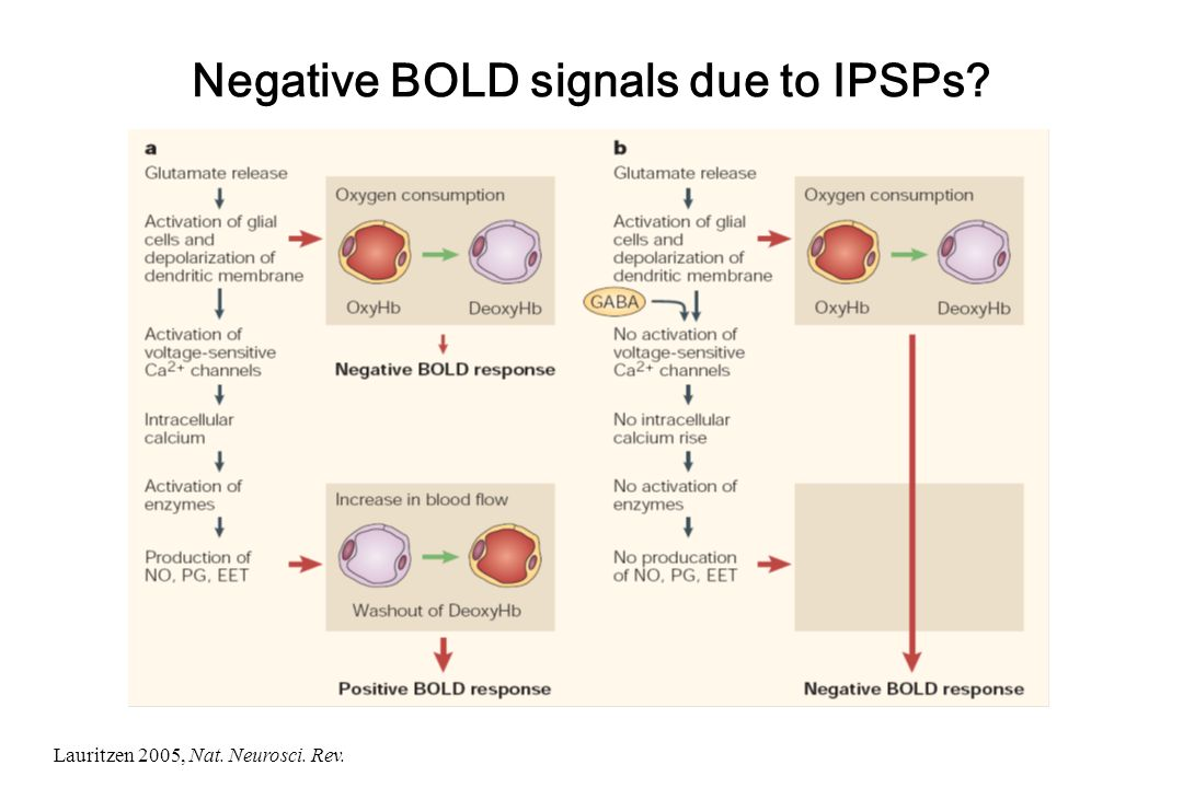 Negative BOLD signals due to IPSPs