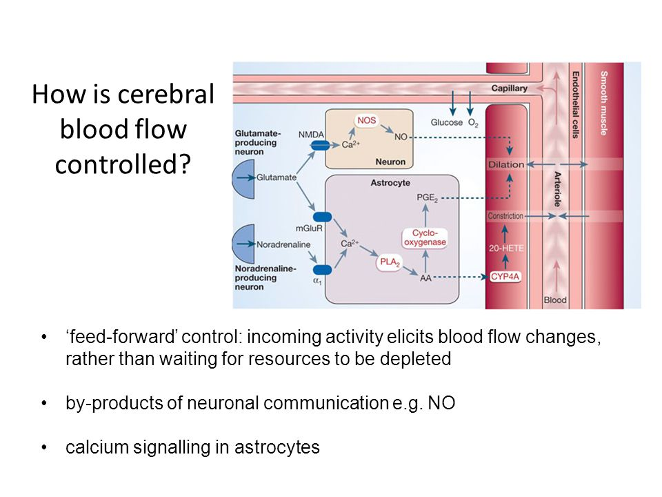 How is cerebral blood flow controlled