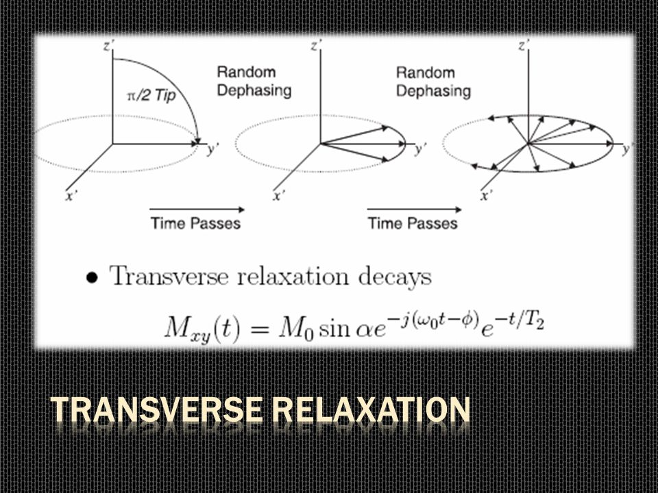 Transverse Relaxation