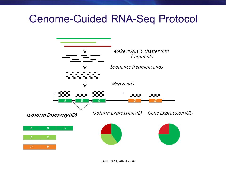 Genome-Guided RNA-Seq Protocol