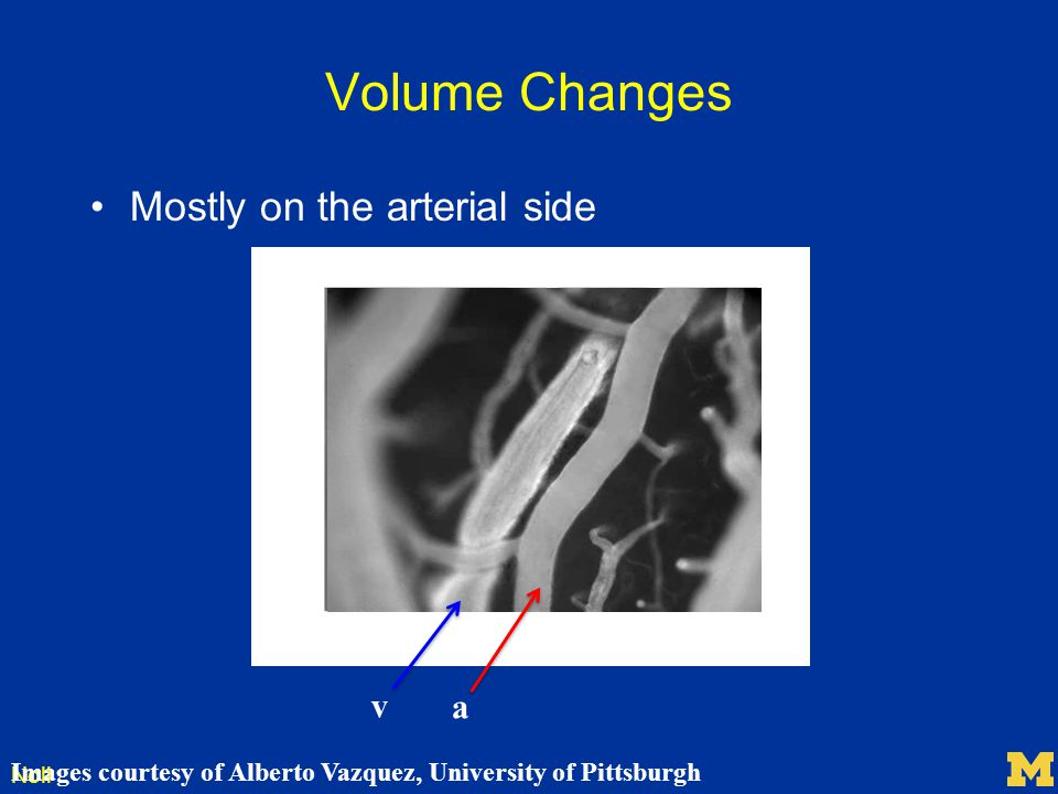 Volume Changes Mostly on the arterial side v a
