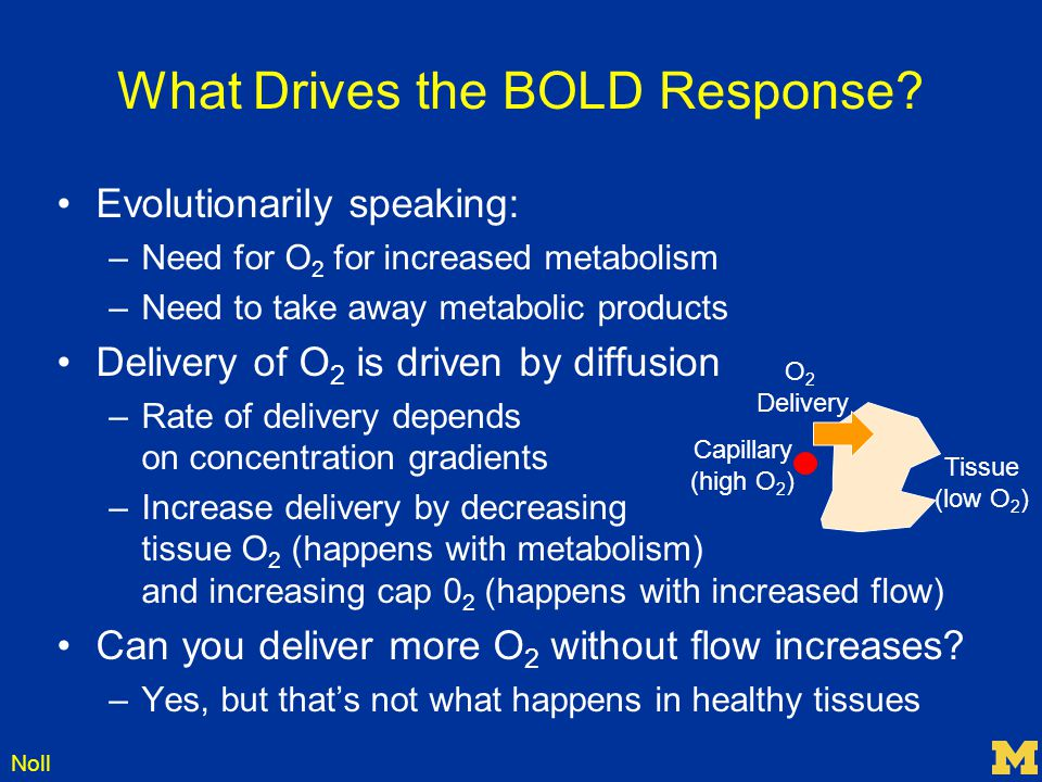 What Drives the BOLD Response