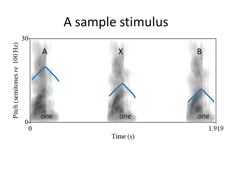 A sample stimulus A X B