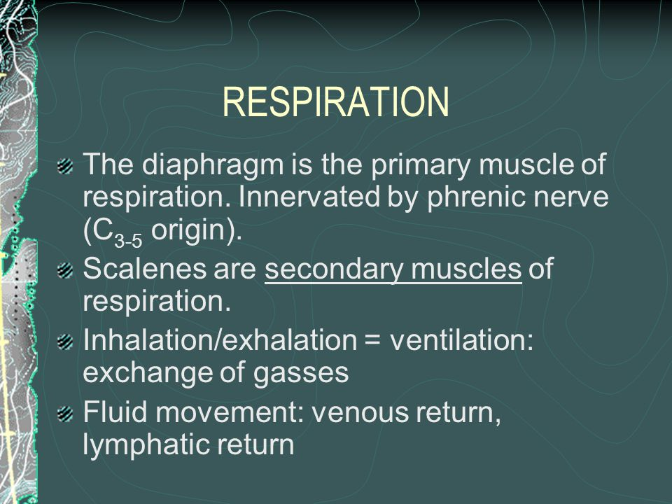RESPIRATION The diaphragm is the primary muscle of respiration. Innervated by phrenic nerve (C3-5 origin).