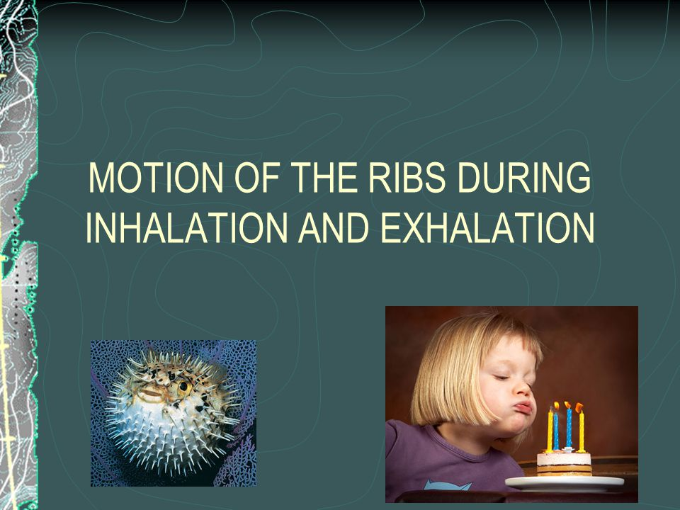 MOTION OF THE RIBS DURING INHALATION AND EXHALATION