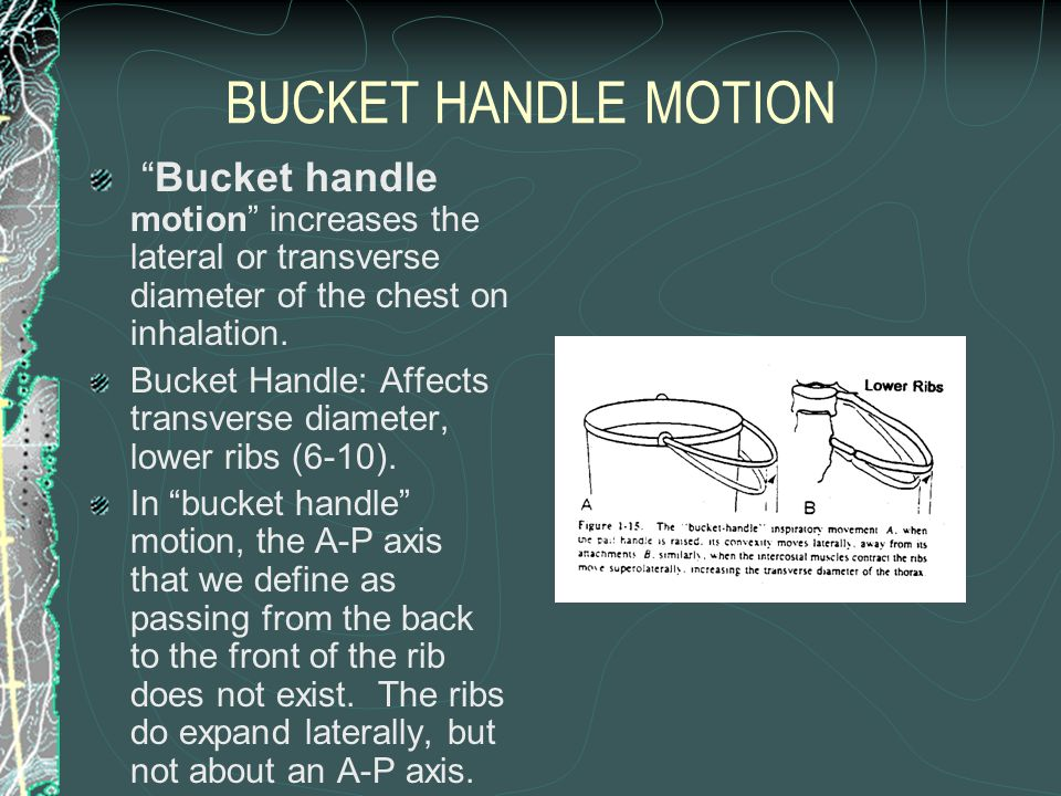 BUCKET HANDLE MOTION Bucket handle motion increases the lateral or transverse diameter of the chest on inhalation.