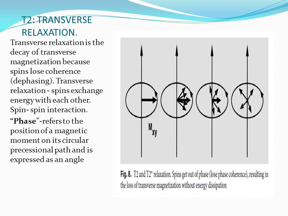 T2: TRANSVERSE RELAXATION.