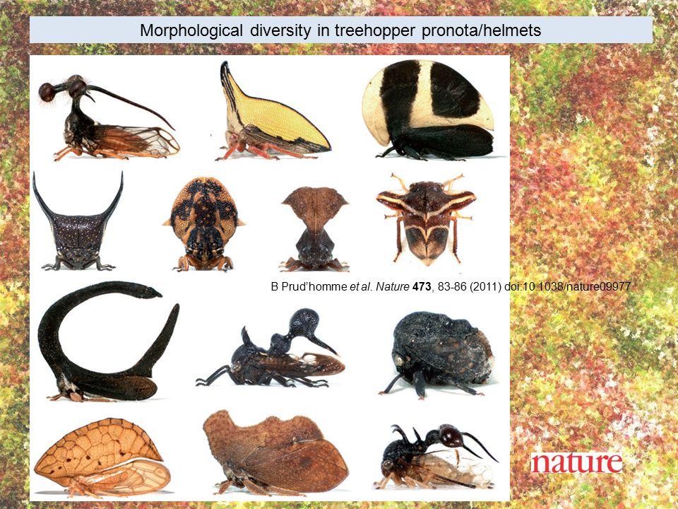 Morphological diversity in treehopper pronota/helmets