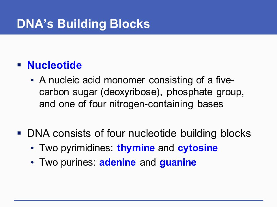DNA's Building Blocks Nucleotide