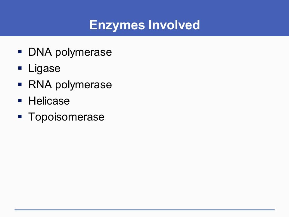 Enzymes Involved DNA polymerase Ligase RNA polymerase Helicase