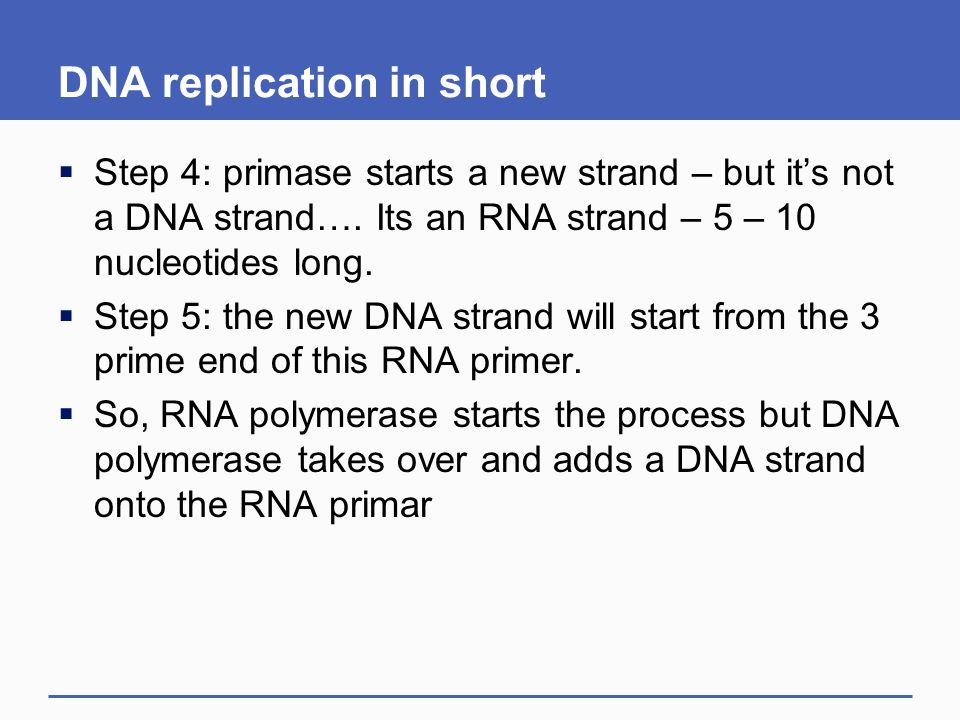DNA replication in short
