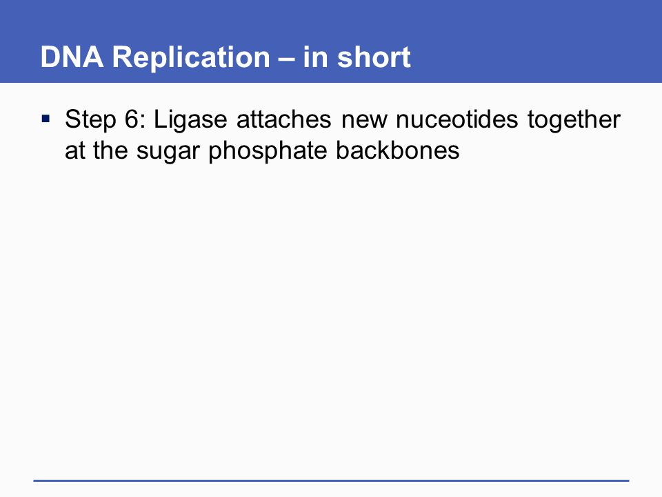 DNA Replication – in short
