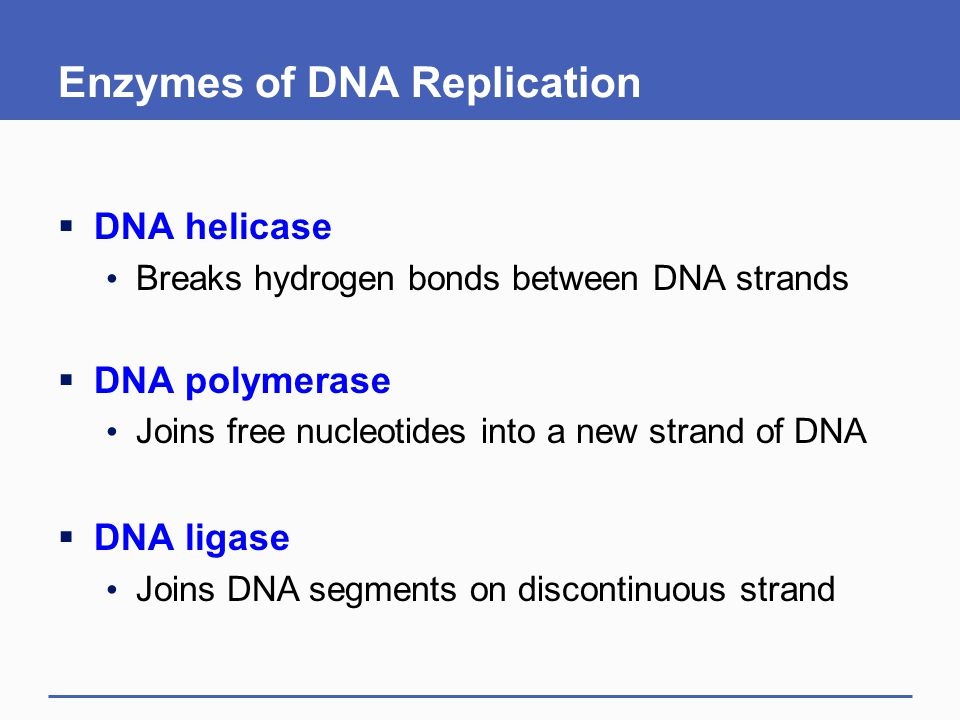 Enzymes of DNA Replication