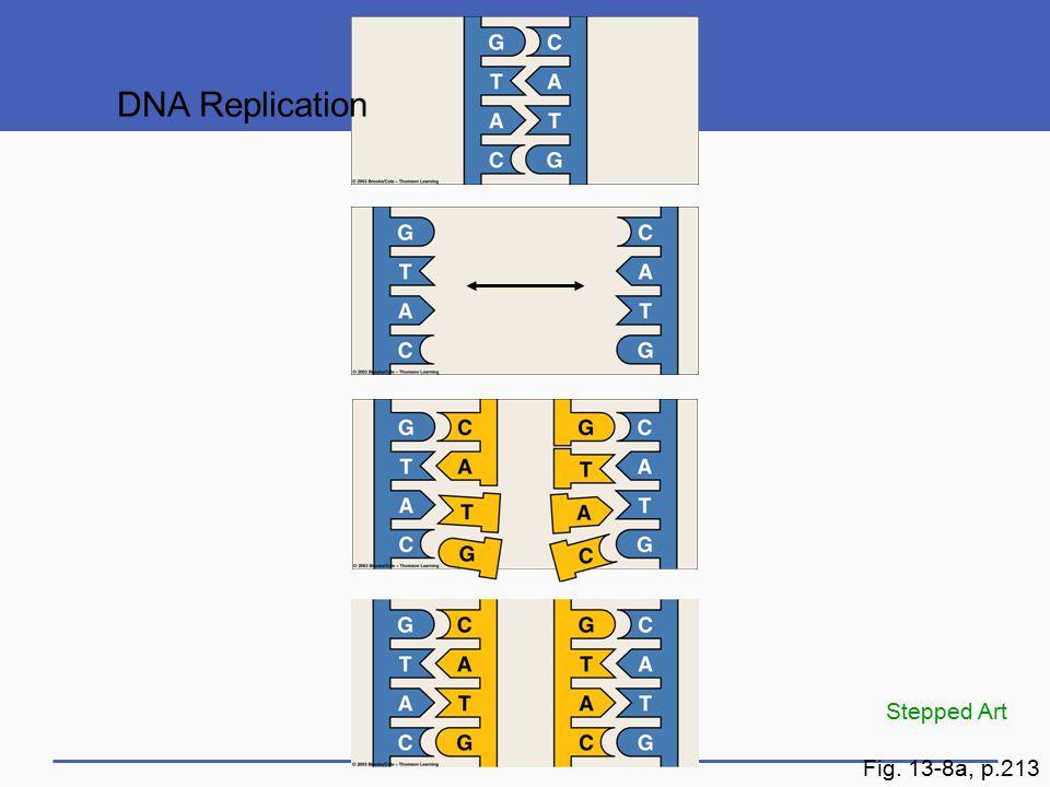 DNA Replication Stepped Art Fig. 13-8a, p.213