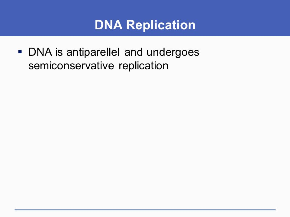 DNA Replication DNA is antiparellel and undergoes semiconservative replication