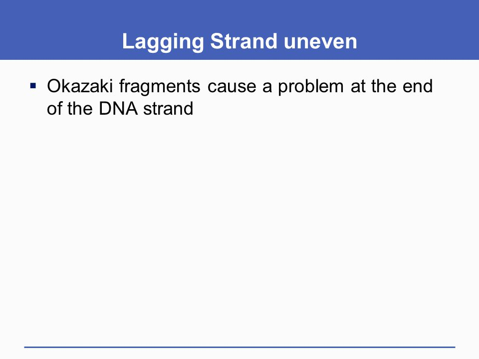 Lagging Strand uneven Okazaki fragments cause a problem at the end of the DNA strand