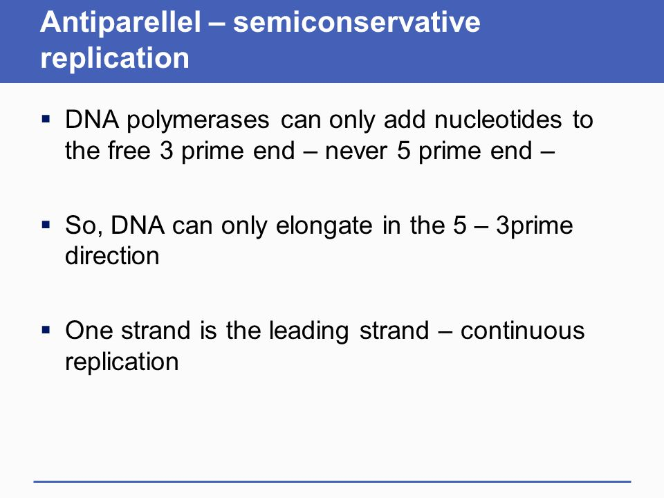 Antiparellel – semiconservative replication