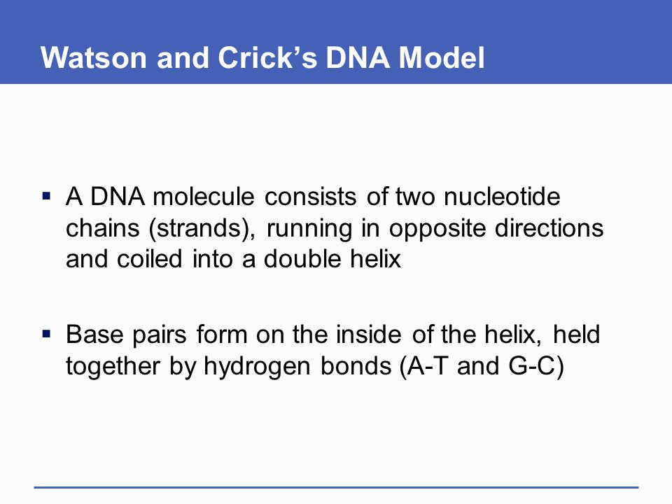 Watson and Crick's DNA Model