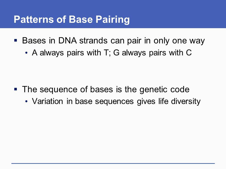 Patterns of Base Pairing