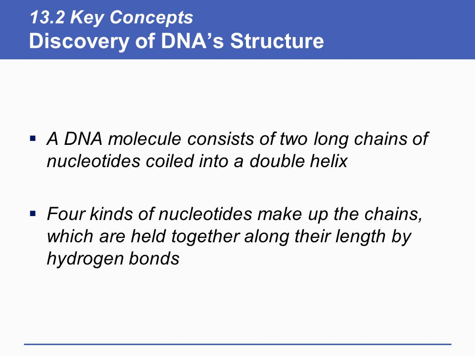 13.2 Key Concepts Discovery of DNA's Structure