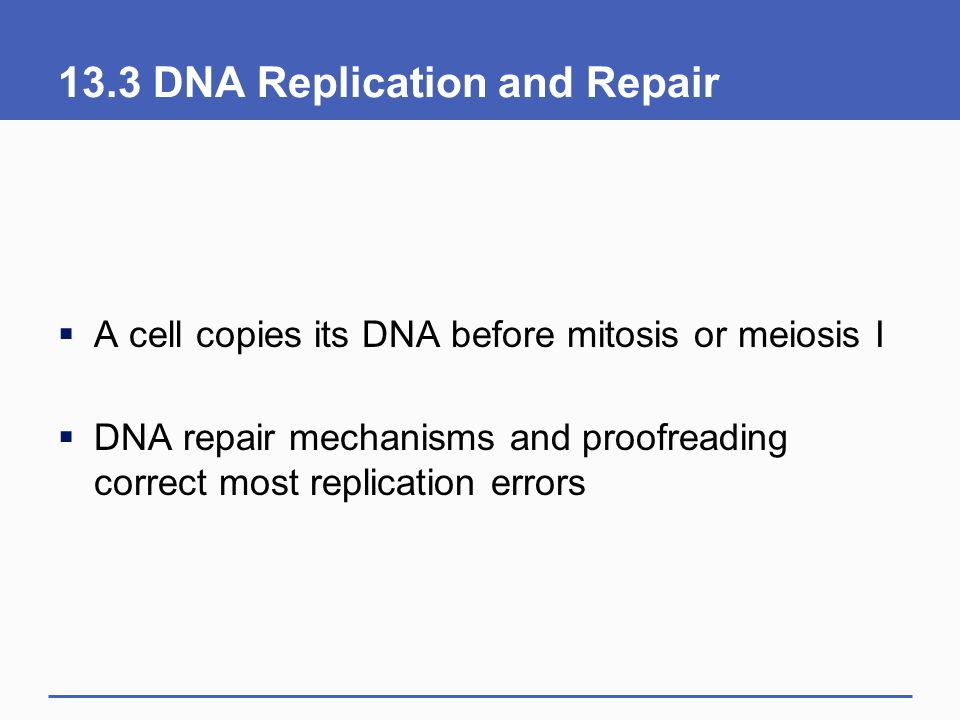 13.3 DNA Replication and Repair