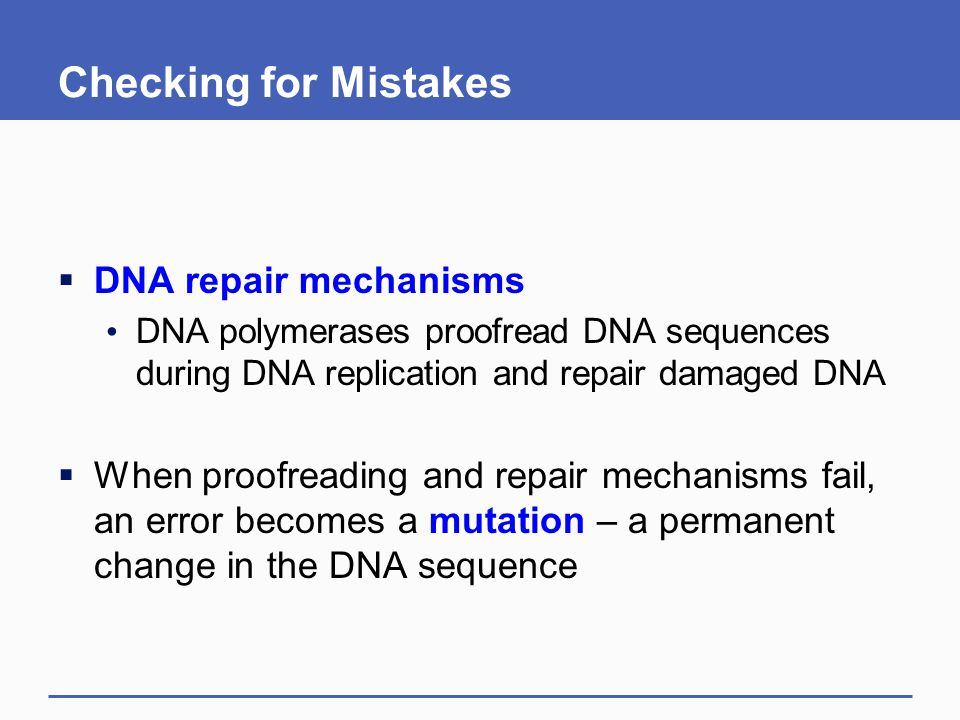 Checking for Mistakes DNA repair mechanisms