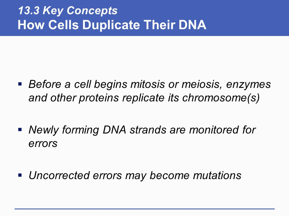 13.3 Key Concepts How Cells Duplicate Their DNA