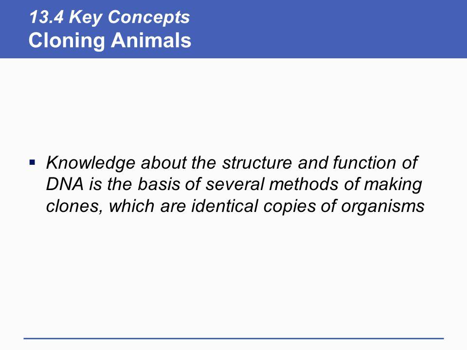 13.4 Key Concepts Cloning Animals
