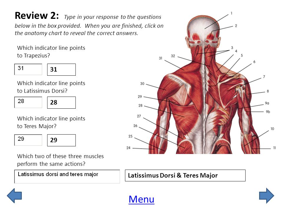Review 2: Type in your response to the questions below in the box provided. When you are finished, click on the anatomy chart to reveal the correct answers.