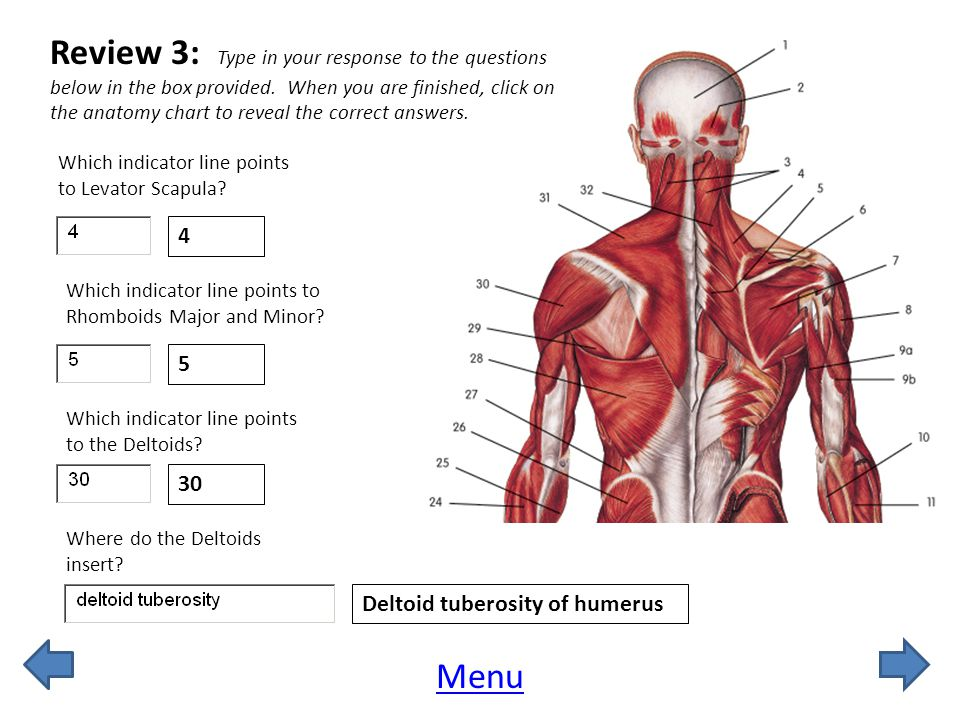 Review 3: Type in your response to the questions below in the box provided. When you are finished, click on the anatomy chart to reveal the correct answers.